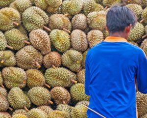 Durianmon Fruit Stall