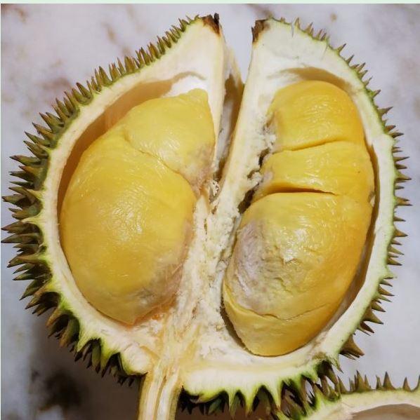 Durianmon XO Durian